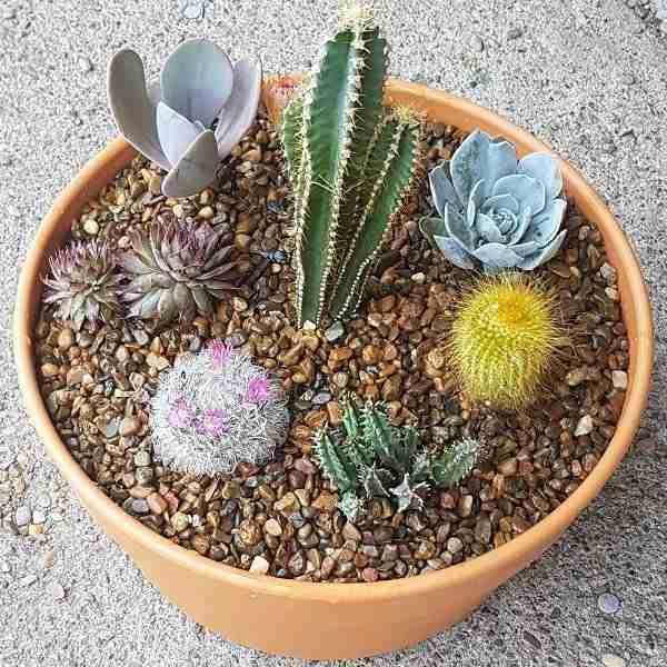 cactus and succulent gardens